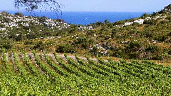 vignoble Languedoc