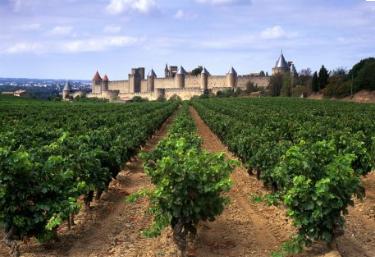 Vignes Carcassonne